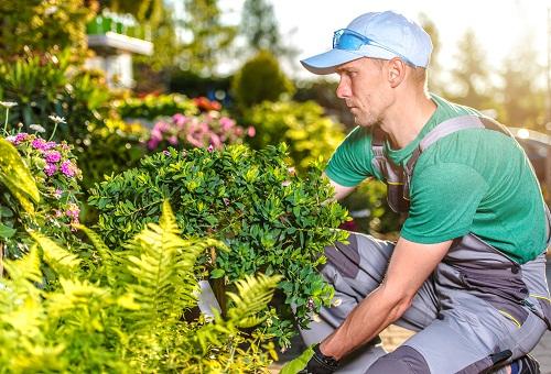 un paysagiste à Vitry-le-François