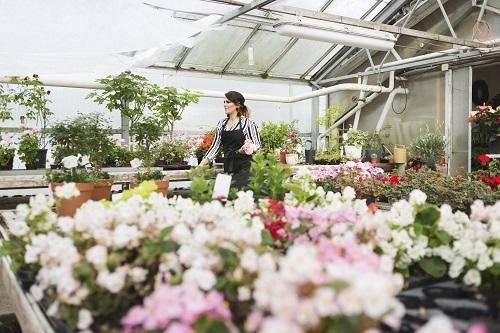 Boutique de fleurs en ligne